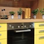Cele 13 plante care fac minuni in bucataria ta!