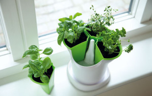 pot-special-aromates-vert-blanc_02
