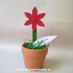 Kit plantabil martisor