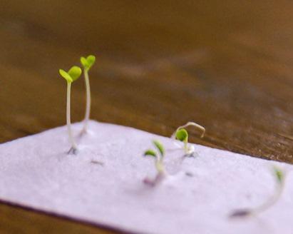 carte de vizita germinata