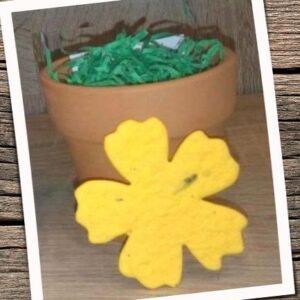 Kit cu floare plantabila