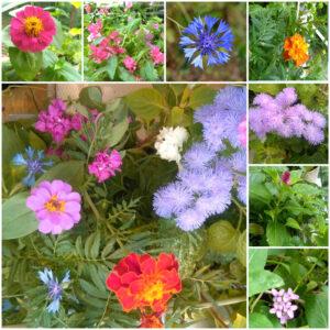 mix de flori